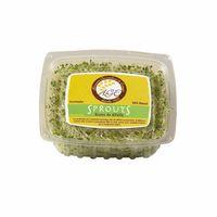germinado-age-sprouts-alfalfa-100gr