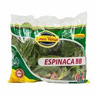 espinaca-bb-linea-verde